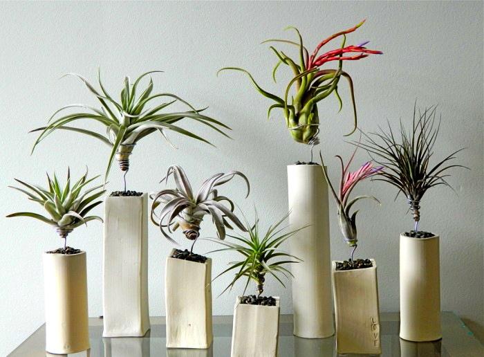 Indoor Gardening Air Plants
